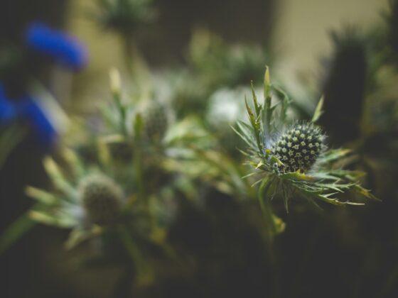 Ideen für den Garten: Symbolbild mit einer Distelblüte von Visualhunt.