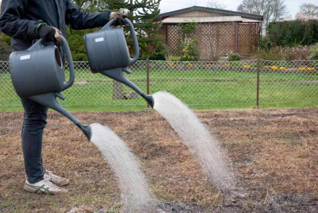 Eine Frau gießt einen sehr trocken aussehenden Rasen mithilfe von zwei anthrazitfarbenen Gießkannen.