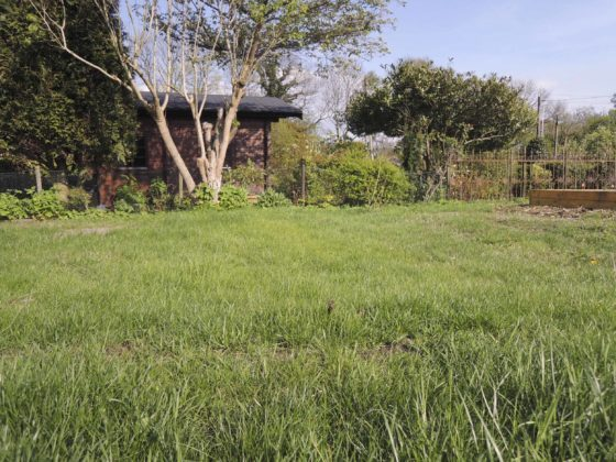 Eine Rasenfläche mit wenigen kahlen Flecken, im Hintergrund ist ein Fliederbusch zu sehen.