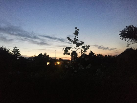 Abendhimmel im Schrebergarten im August.