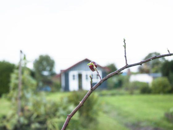 Garten im Oktober: Hagebuttenzweig, im Hintergrund ein Garten mit Gartenlaube.