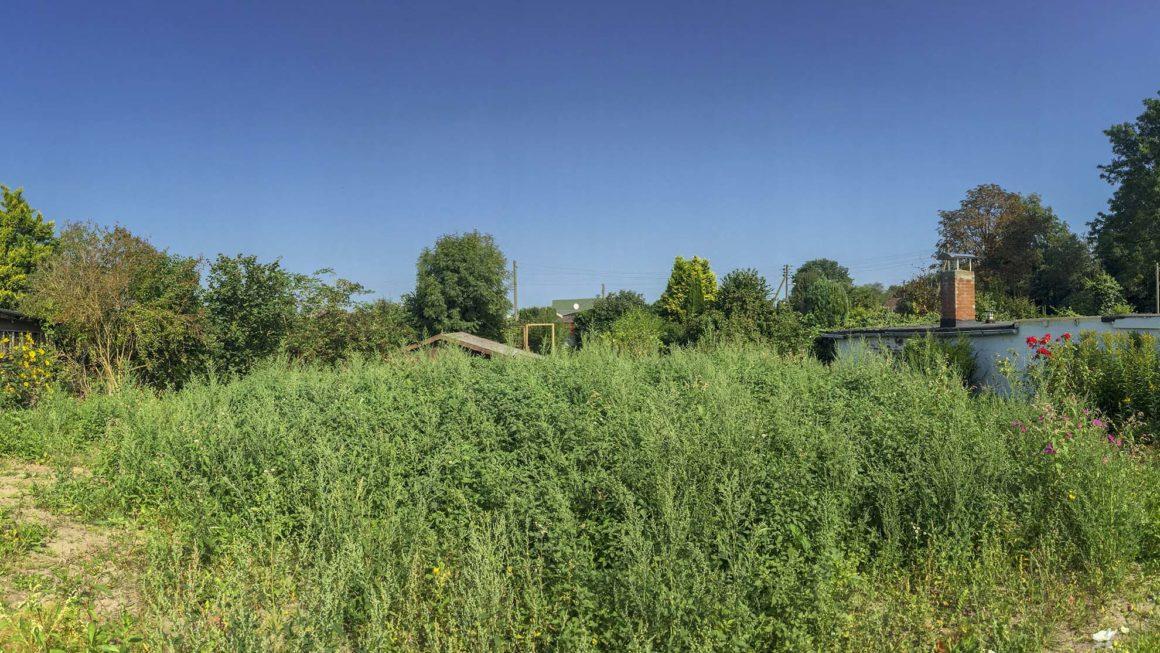 Blick in den Garten – Kleingarten Hamburg – Wie alles begann