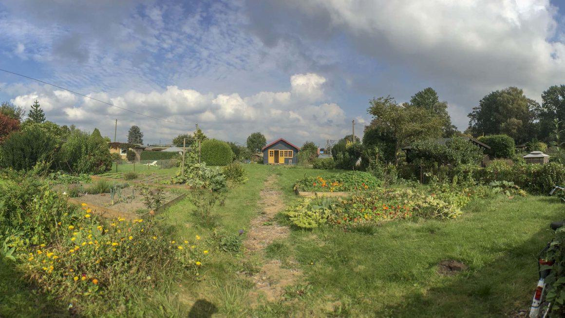 Blick in den Garten – Kleingarten Hamburg im September