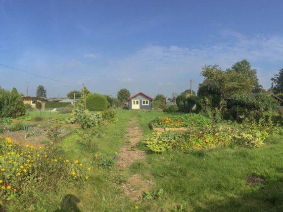 Blick in den Garten – Kleingarten Hamburg – Die Hütte ist nun fast fertig gestrichen