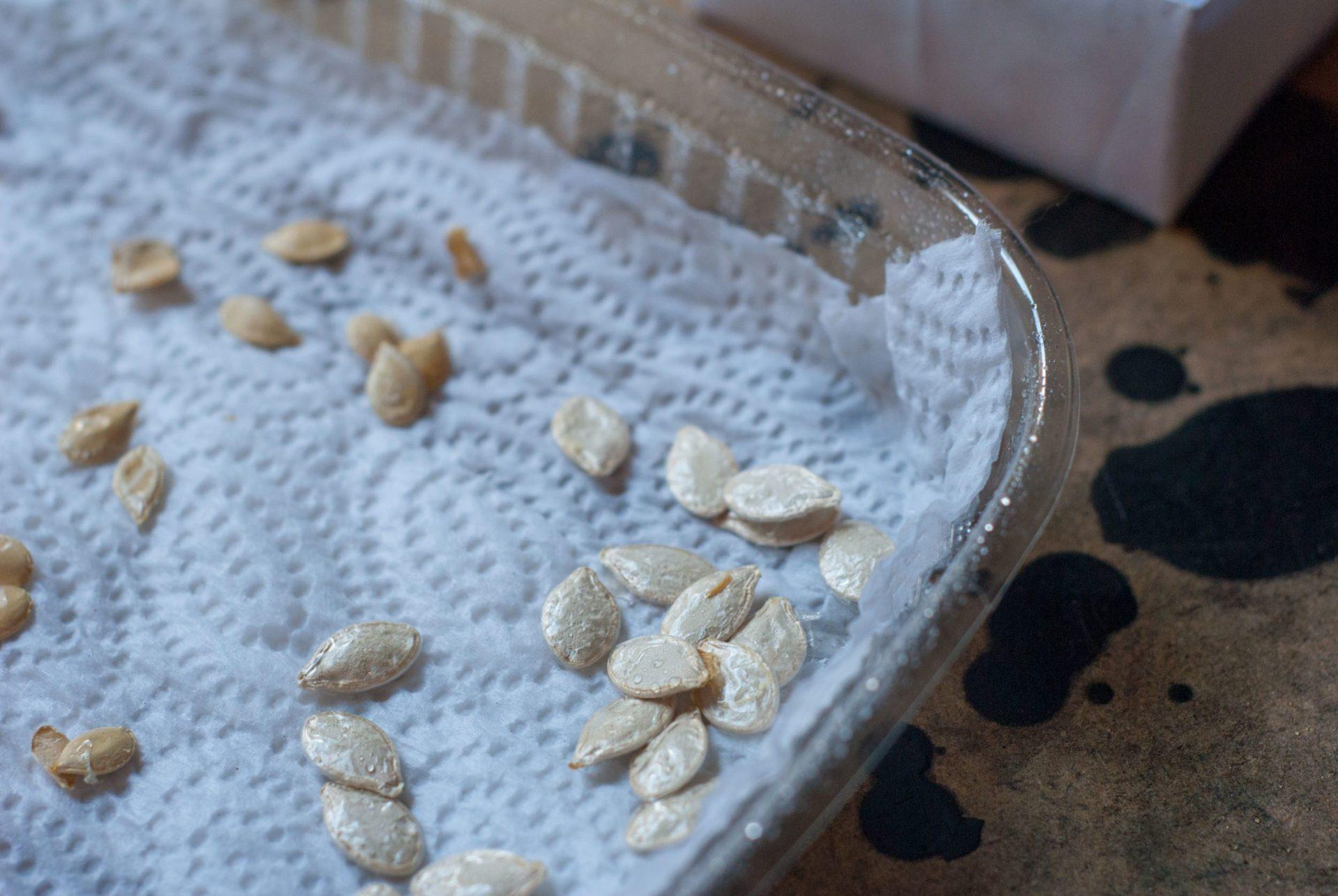 Mit Kürbissamen wird eine Keimprobe durchgeführt.