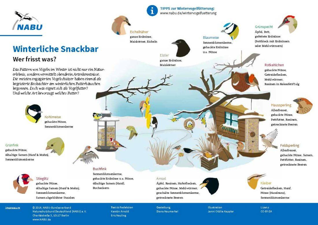 Vögel füttern, aber richtig! Die Grafik des NABU zeigt, wie es geht.