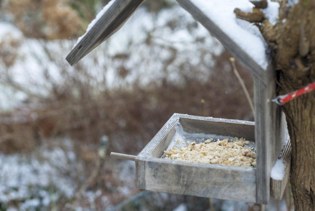 Vögel füttern: Ein Vogelfutterhaus mit Nüssen hängt in einem winterlichen Fliederbusch.