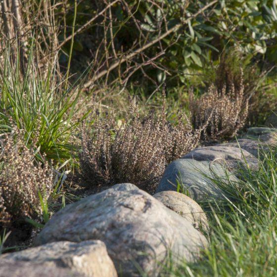 Beeteinfassungen Ideen: Nahaufnahme eines Blumenbeetes, das mit Natursteinen eingefasst ist.